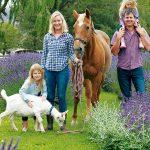 Westmere lavender farm