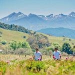 peony growers New Zealand