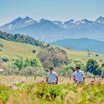 peony growers New Zealand