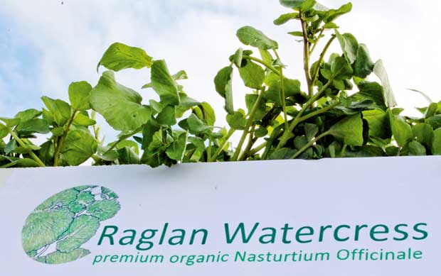 feature-organics-raglan-watercress-img_0235a