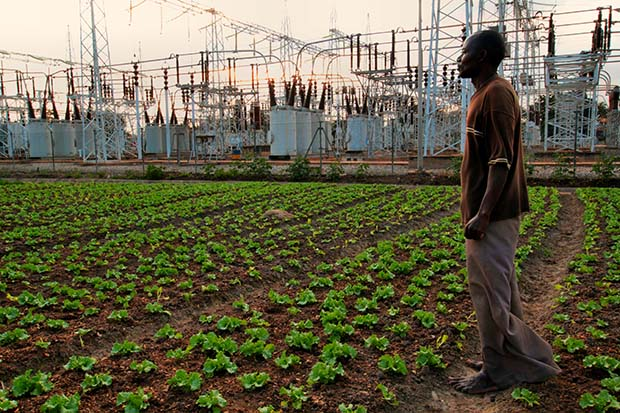 Plant This Movie explores different types of urban farming around the world.