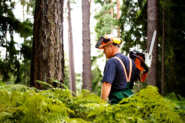 A beginner's guide to chainsaw safety - thisNZlife