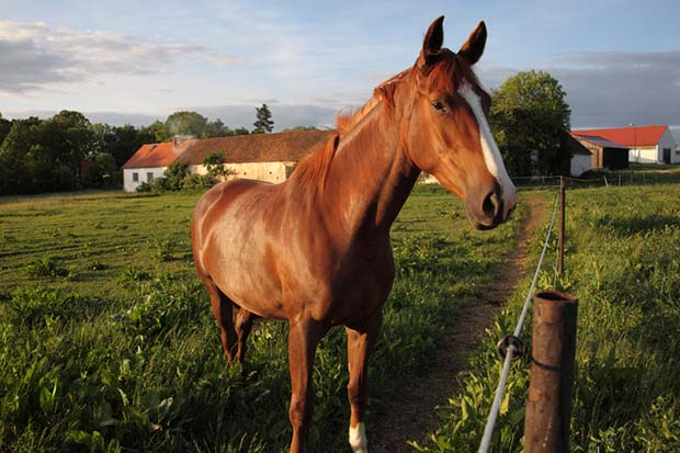 how much land is needed for a horse