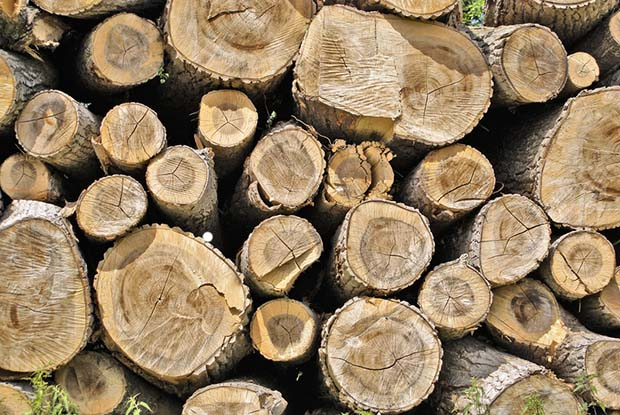 5 Tips To Drying Firewood Thisnzlife
