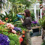 Olveston garden glasshouse