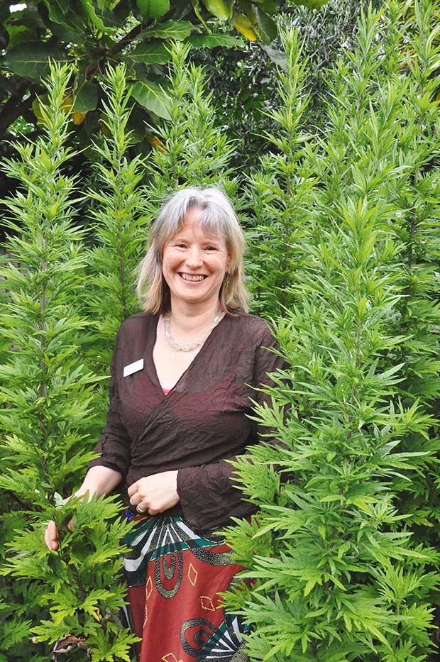 Bronwyn dwarfed by croneswort (Artemisia vulgaris) an unlikely tonic herb
