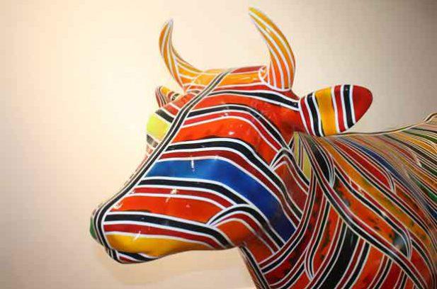 Morrinsville cow