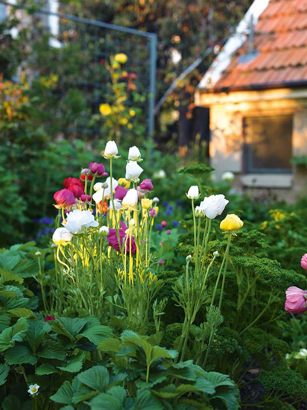 flowers at olveston