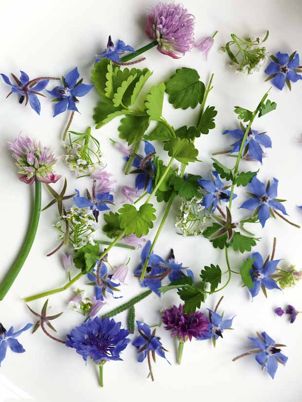 Flowers from The Secret Garden