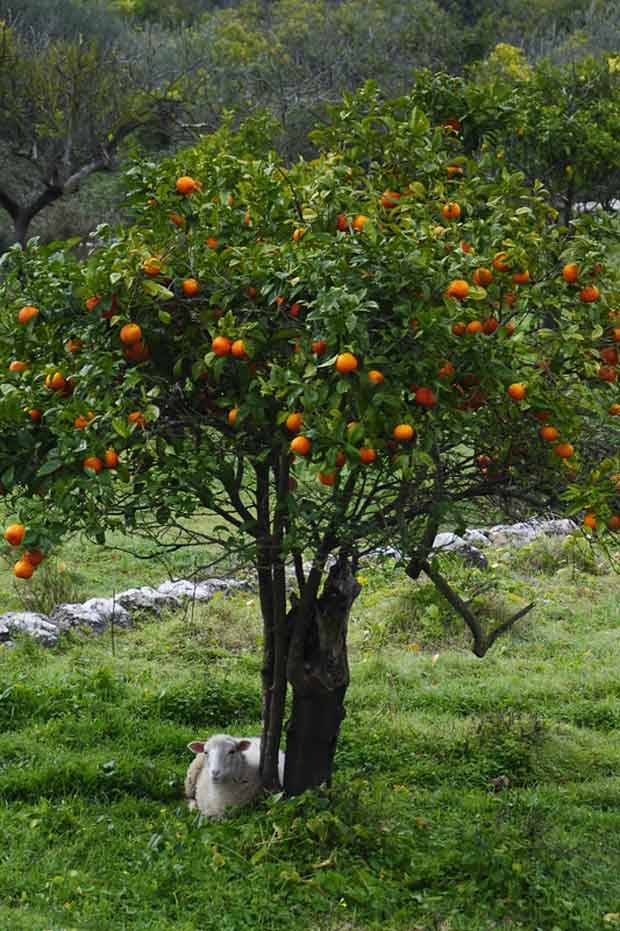 weed management fruit trees