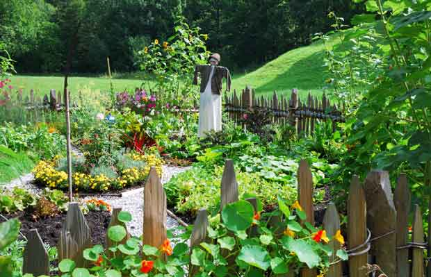 Winter is the time to start thinking about planning your garden