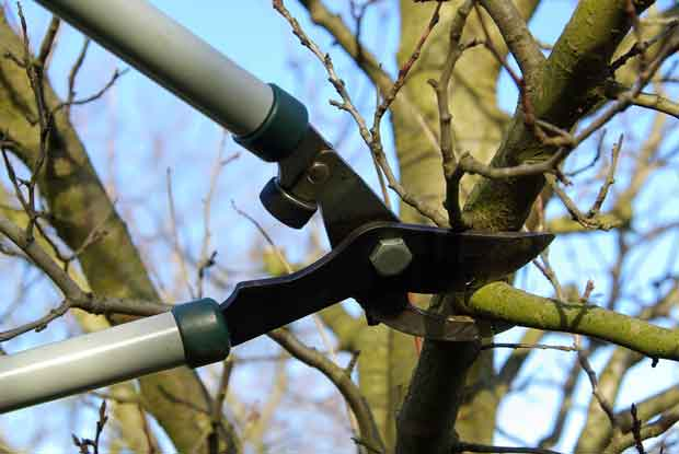 There are two types of blades for secateurs,– anvil or bypass.