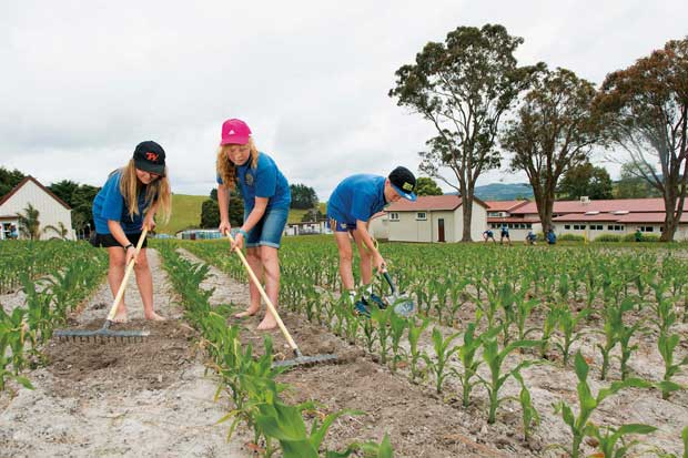 Weed control in the maize crop Hukerenui School