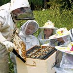 Hukerenui School child beekeeper