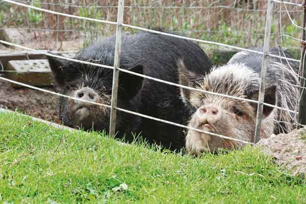 Daughter Porky (left) and her mum, Simmy
