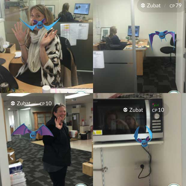 Zubats in the thisNZlife office.
