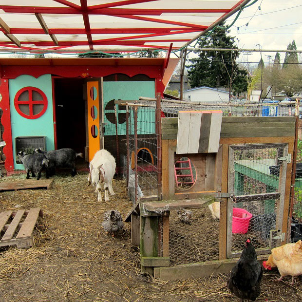 Your-Poultry-Coop-of-the-monthIMG_0225