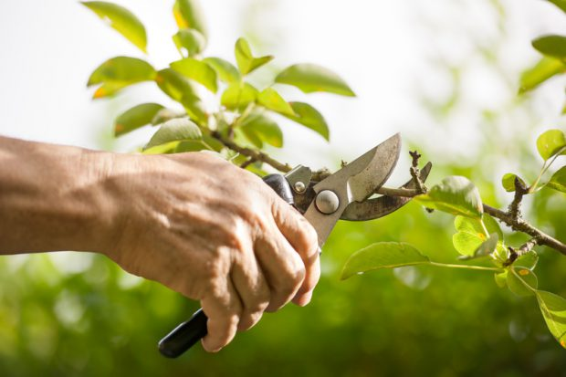 12 Tips For Good Tree Pruning Thisnzlife