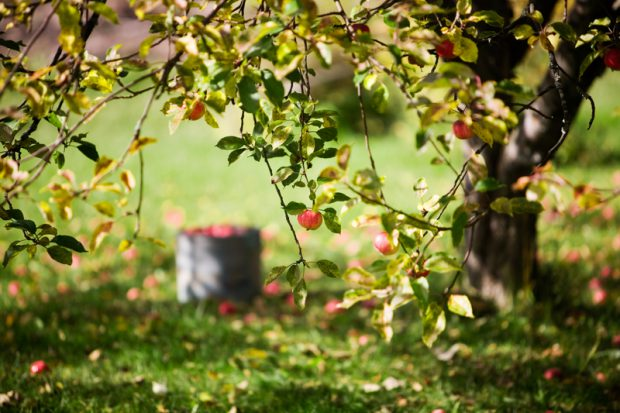 how to design a fruitful home orchard - thisnzlife