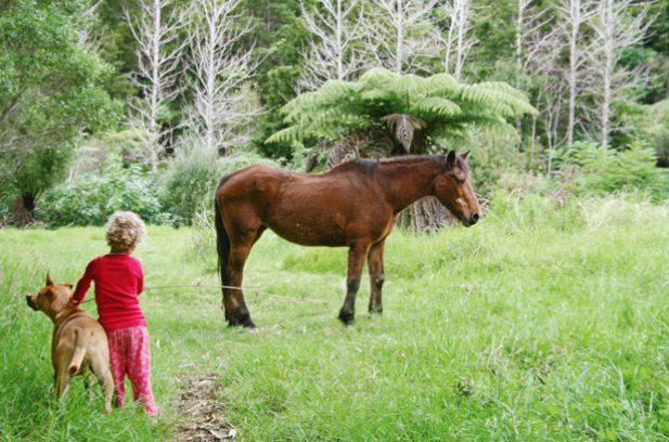 local horse