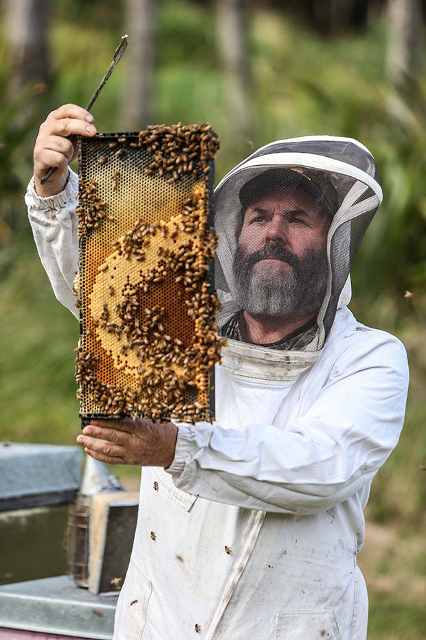 08102015 Feature: Chris Skelton / Fairfax Media Organic Bee keepers, Terry Shaw-Toomey and Karlene from honey company Earthbound Honey Ltd. For NZ Life and Leisure feature.