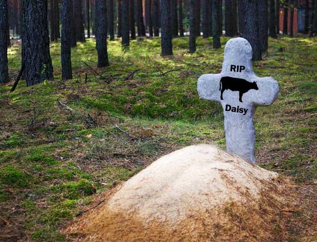 Animal grave