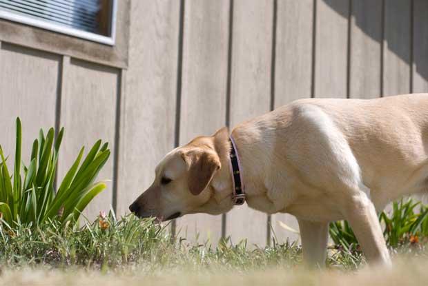 Dog sniffing plant