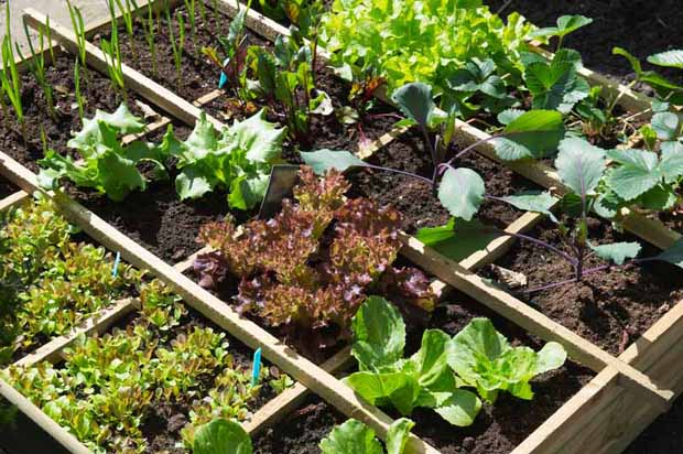 How To Prepare A Vegetable Patch