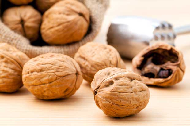 10 things to know about growing walnuts for profit thisnzlife - Growing french walnuts for a profit ...