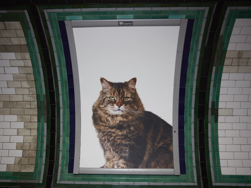 Cat poster at Clapham Station