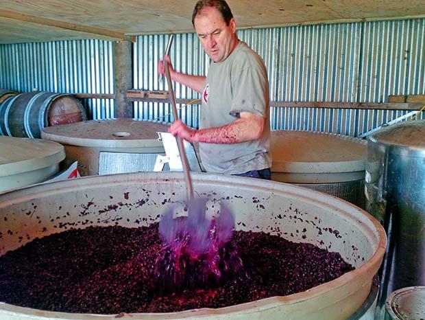 Feature - Organic vineyardPlunging Pinot Noir 2014