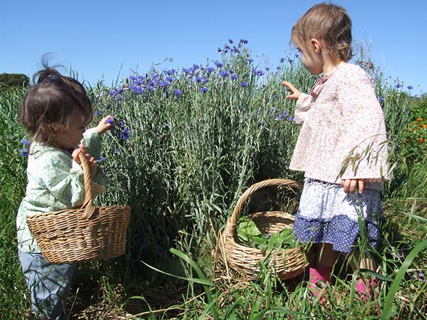 Eliza (left) and Anna pick cornflowers to go in their salad for dinner.