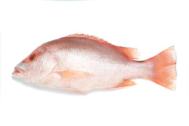 Deficient in iodine? Add more seafood to your diet.