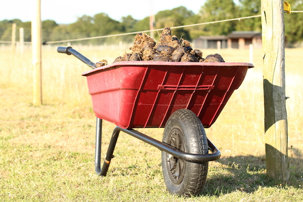 How To Use Horse Manure With No Regrets Thisnzlife