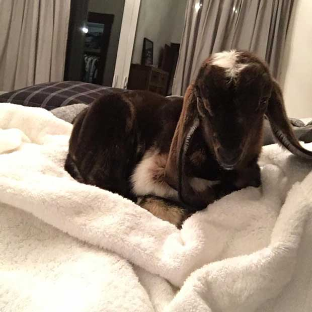 emma-osment-goat-in-bed-1