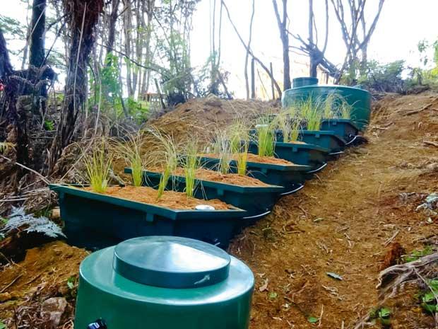 feature-coll-bell-plantfiltersbush
