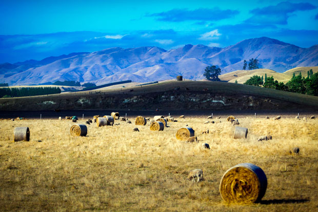 Make hay while the sun is shining.