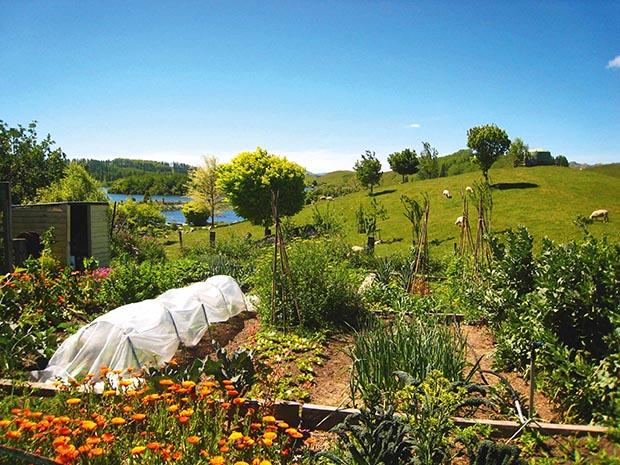 farming in New Zealand