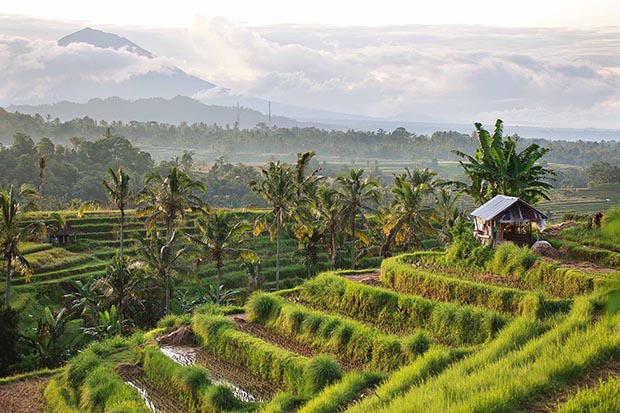 Jatiluwih, where the Subak irrigation system, a manifestation of the ancient Tri Hita Karana philosophy, has gained World Heritage status.