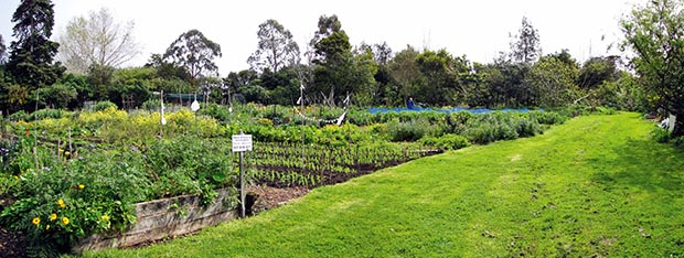Organic vegetable gardens of Unitech with the food forest in the background.