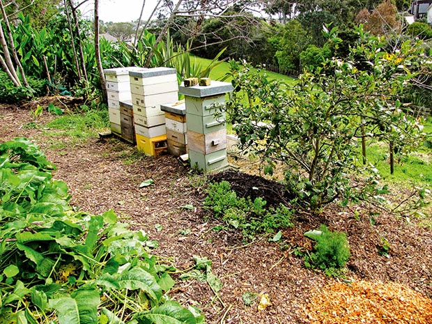 Beehives from Bee Happy provide pollination in return for honey.