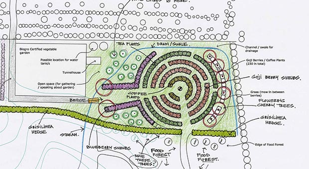 Carl's planting plan showing the berry plantings.