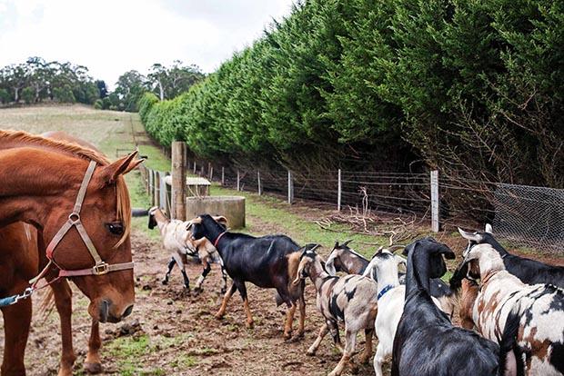 Nine Lives farm