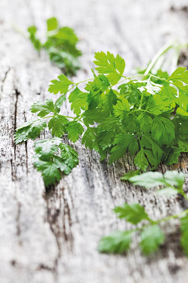 How to grow chervil in New Zealand thisNZlife
