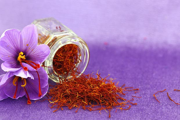 eb63f31d5dba8e 10 tips for growing saffron - thisNZlife