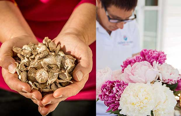 Dove River peony root farm expands into Chinese market