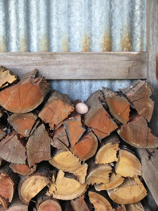 Why Your Hens Lay Outside Of Their Nest Thisnzlife