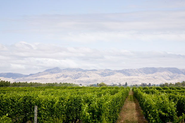 Vineyard New Zealand Air NZ Wine Awards