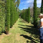 Garden Marlborough