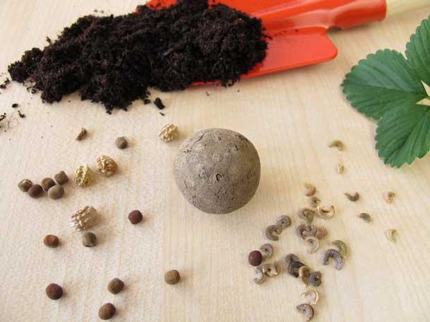 Diy Herbal Seed Bombs Thisnzlife
